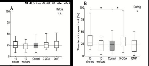 Test d'attraction : boxplots montrant la médiane du temps passé par les mâles dans le quadrant « stimulé » avant (A) et pendant (B) l'accès au stimulus.